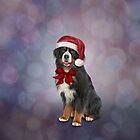 Bernese Mountain Dog in red hat of Santa Claus by bonidog