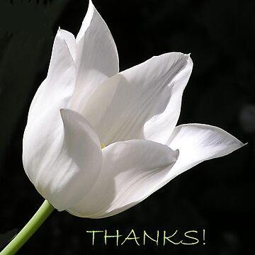 White Tulip Thank You Card by BettyMackey