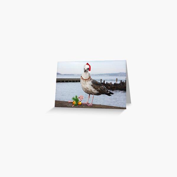 Christmas Seagull  Greeting Card