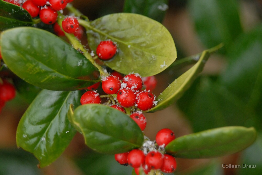 Red Berries with a Dusting by Colleen Drew