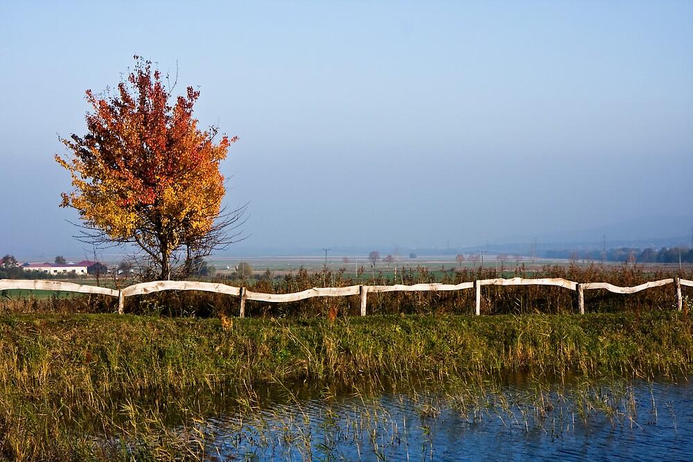 Autumn tree by Kasia Fiszer