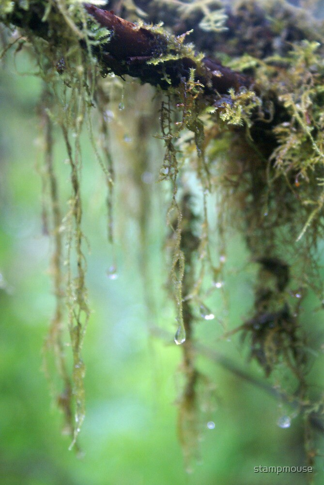 drops of moss  by stampmouse