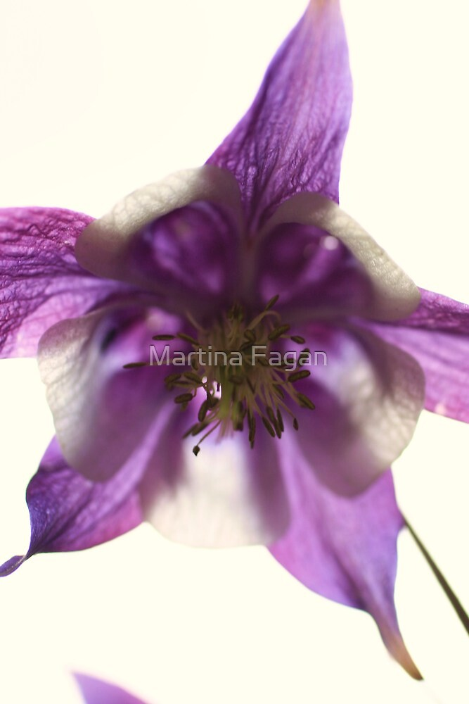 Purple star by Martina Fagan