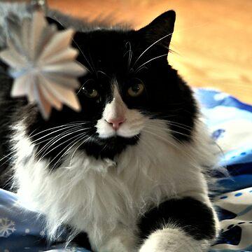 Christmas Cat by terrebo