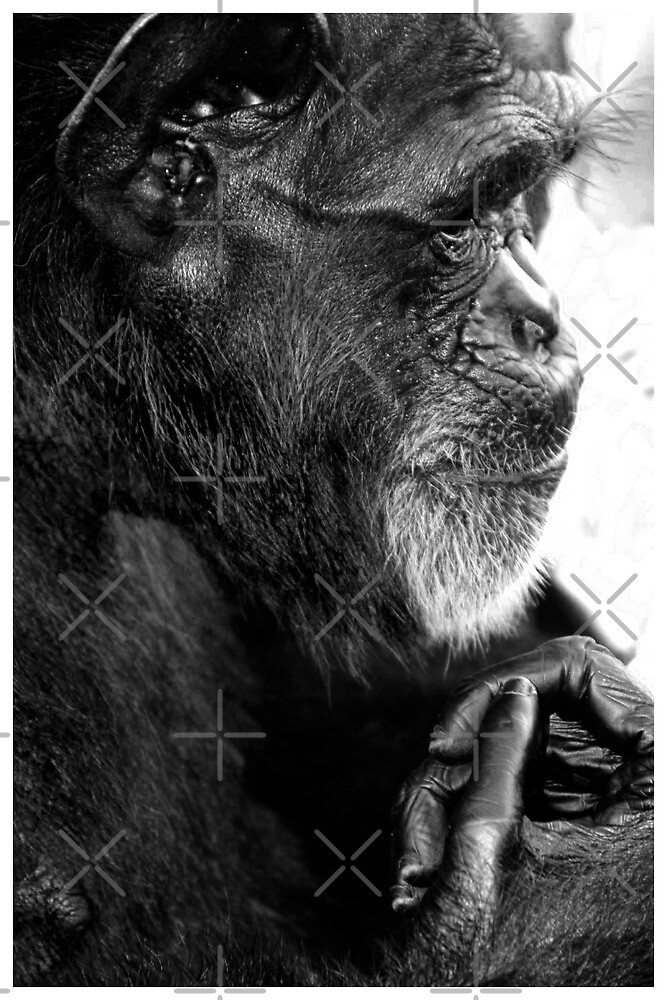 Deep Thinker by Melissa Collins