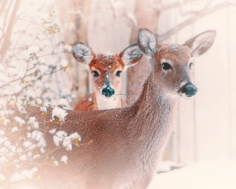 Fawn's First Snow by Thymely