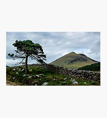 A Tree, On The Rocks Photographic Print
