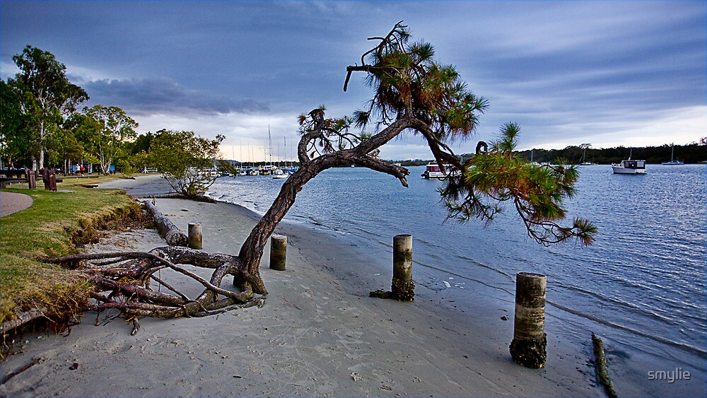 Noosa Tree by smylie