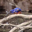 azure kingfisher and fish by gaylene