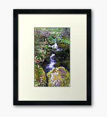 Mossy Stream Framed Print