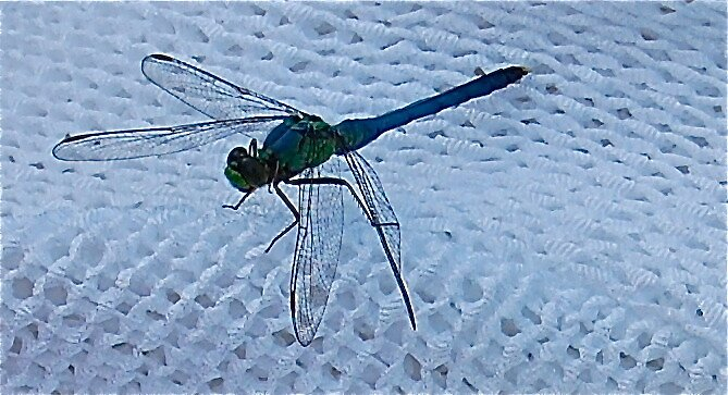 dragonfly by LeanneDixon