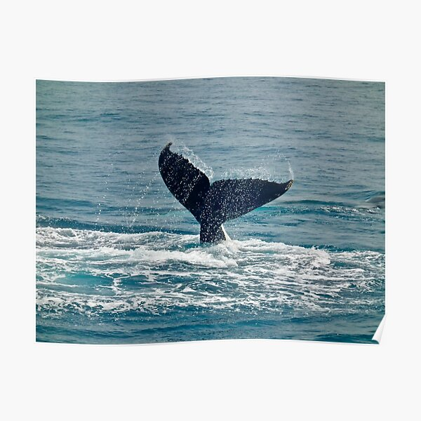 Whale Play Poster