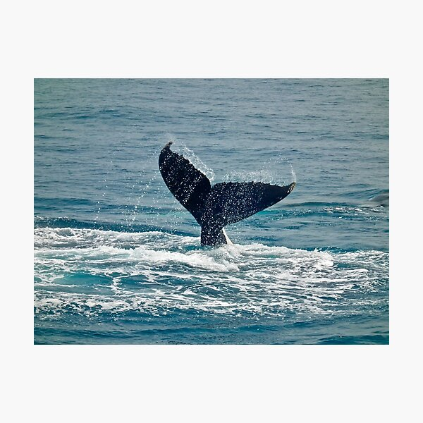 Whale Play Photographic Print