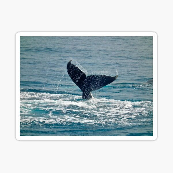 Whale Play Sticker