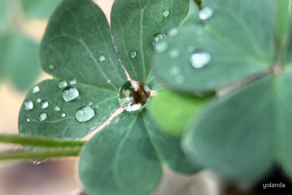 Clover Drops by yolanda