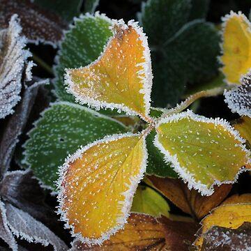 Strawberry on ice by cuprum