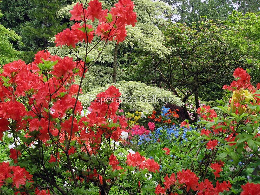 Red in the garden by Esperanza Gallego