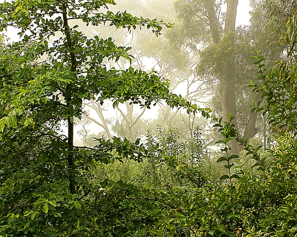Mist in the Trees by Trevor  Tanner