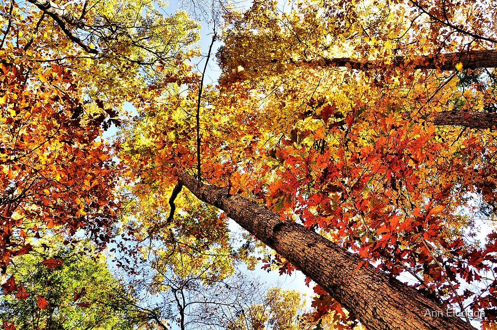 Autumn Wonder by Ann Eldridge