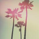 Californian Palm Trees by Pascal Deckarm