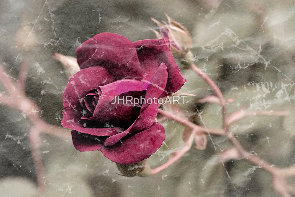 Rose by JHRphotoART