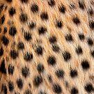Animal Print Pattern Real Cheetah Fur by John Kelly Photography (UK)