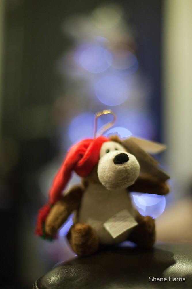Christmas Bear by Shane Harris