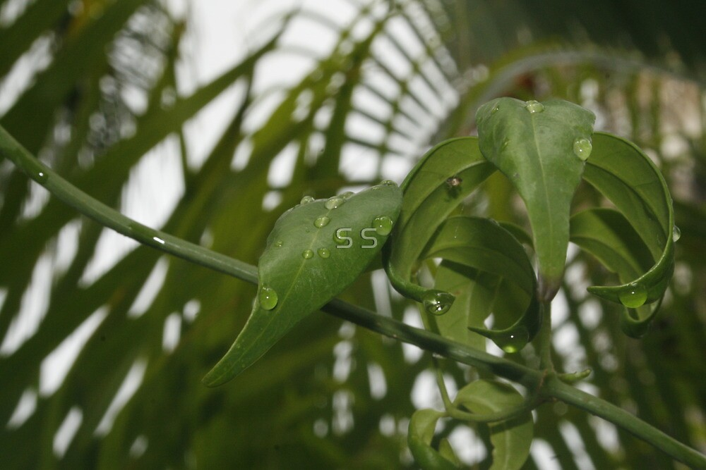 Droplets after Rain by S S