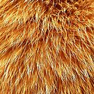 Ginger Red Hair Animal Fur Pattern by John Kelly Photography (UK)