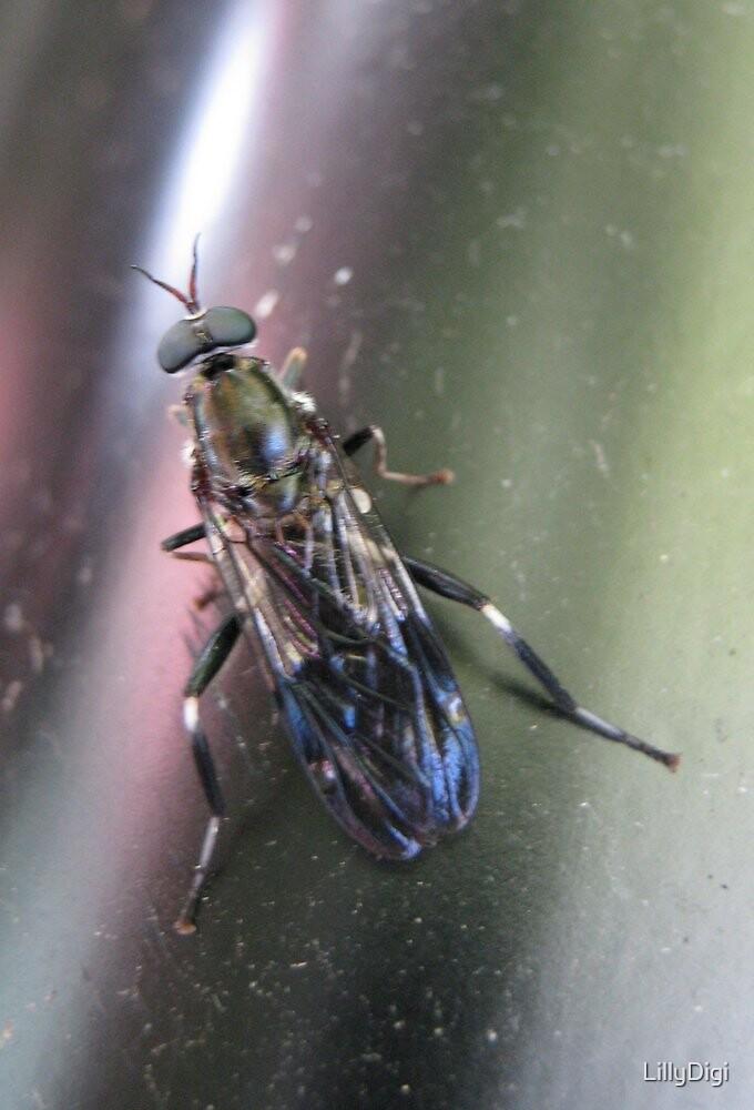 Bug by LillyDigi