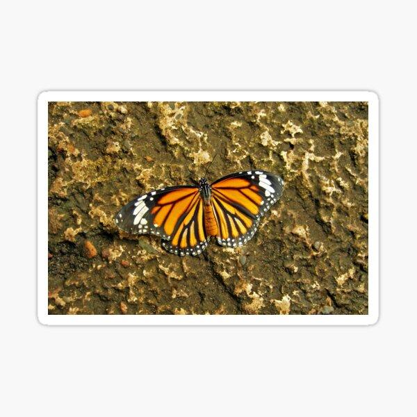 A Common Tiger Sticker