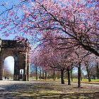 Arch in Springtime by Matthias Keysermann