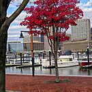 Red Maple and Red Boat by Eileen McVey