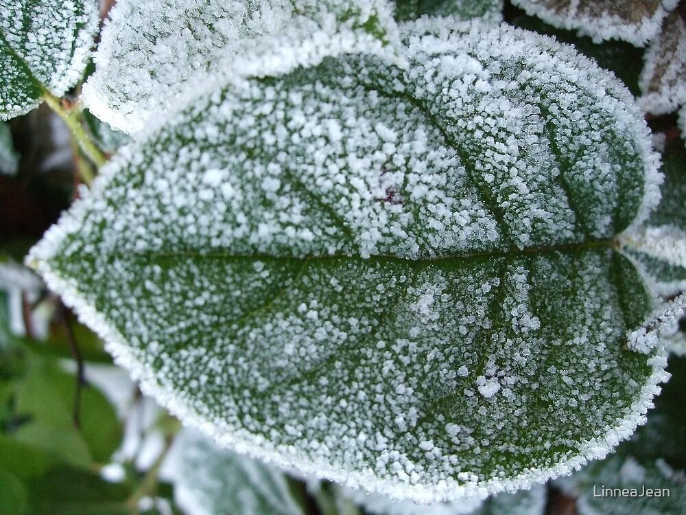 Frosted Leaf by LinneaJean