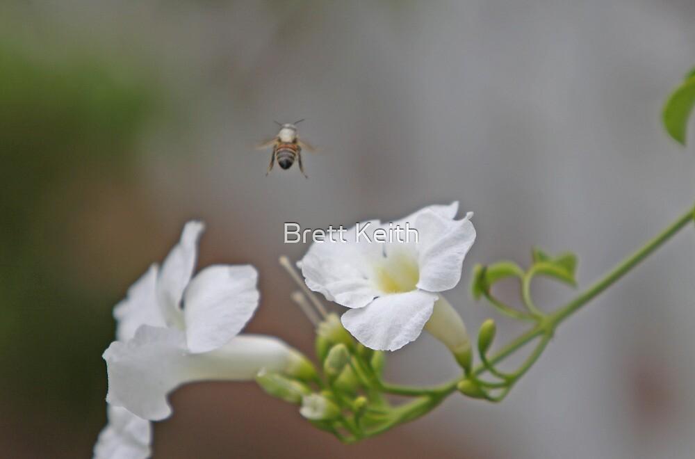 Busy Bee by Brett Keith