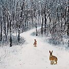 Snowfall stops the chase by Jenny Urquhart
