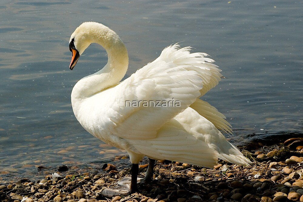 Lakeside beauty. by naranzaria