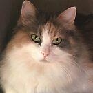 Little Missy Beautiful by redqueenself