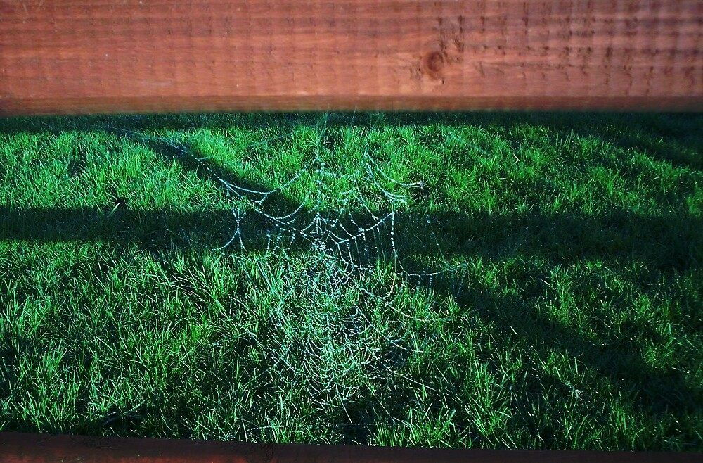 spiders web by johnjsmyth
