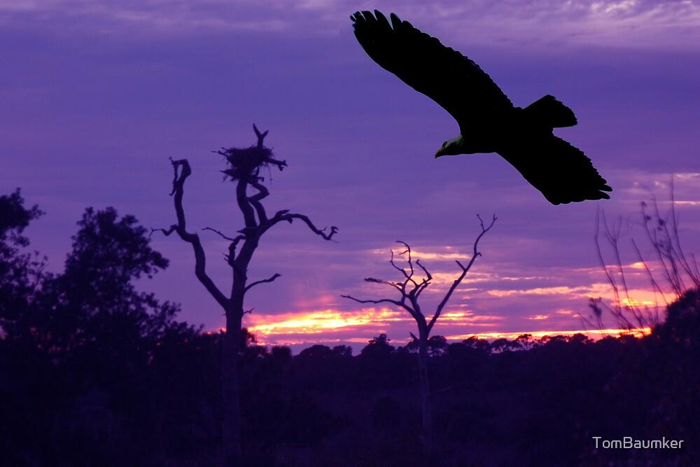 BALD EAGLE AT SUNSET by TomBaumker