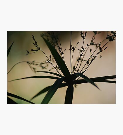 Shadow Dancer Photographic Print