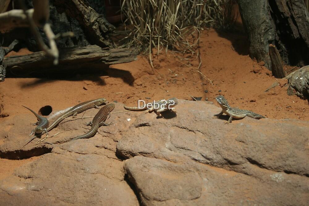 Lizards, Australia by Deb22