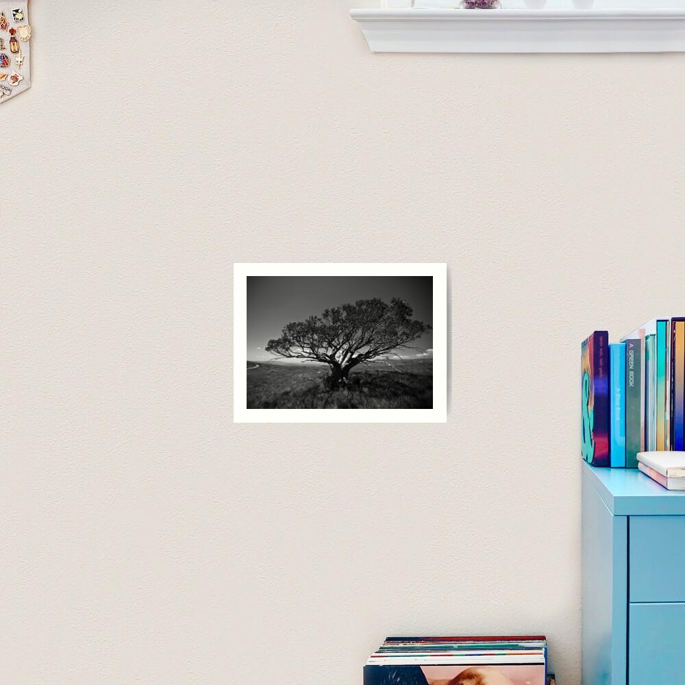 Tree on Mt Stirling, near Mansfield, Victoria. Art Print