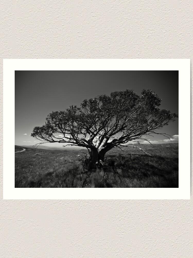 Alternate view of Tree on Mt Stirling, near Mansfield, Victoria. Art Print