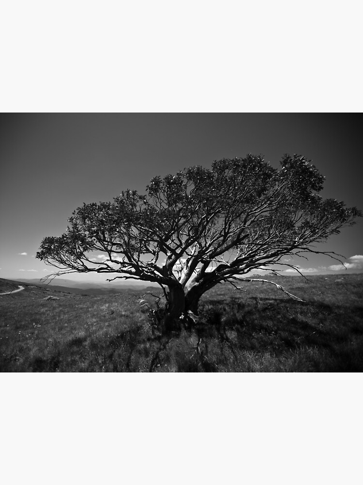Tree on Mt Stirling, near Mansfield, Victoria. by Ashpix