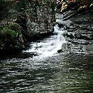 Azalea Cascades by Phillip M. Burrow