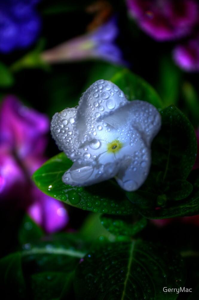 A Star is Born... by GerryMac