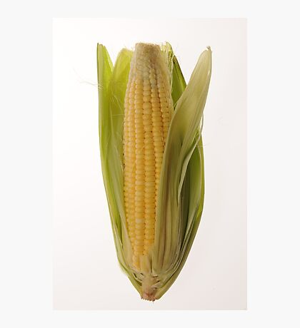 Corn Photographic Print
