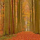 Autumn in the forest of Makegem by xophotography
