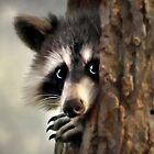 Raccoon by Christina Rollo